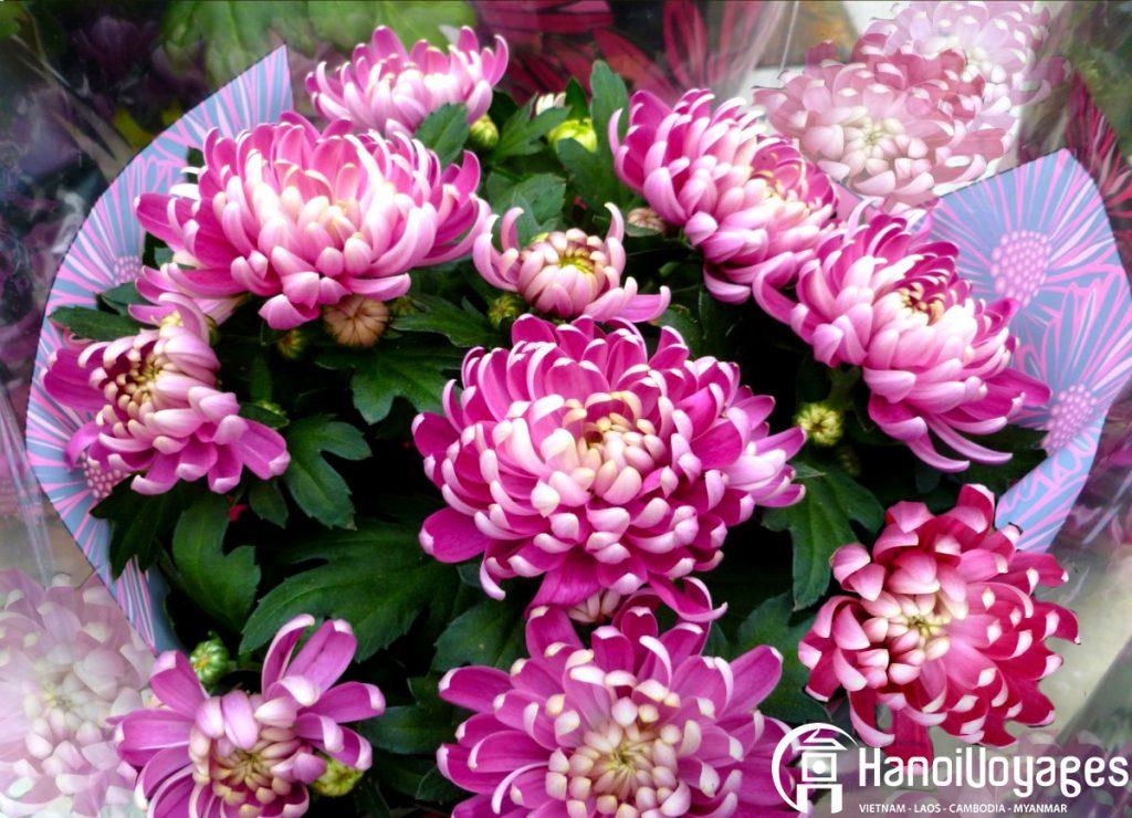 Fleur du têt Chrysanthème - Âme du Vietnam