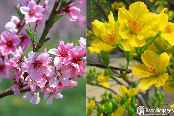 Les fleurs du Têt - Âme du Vietnam