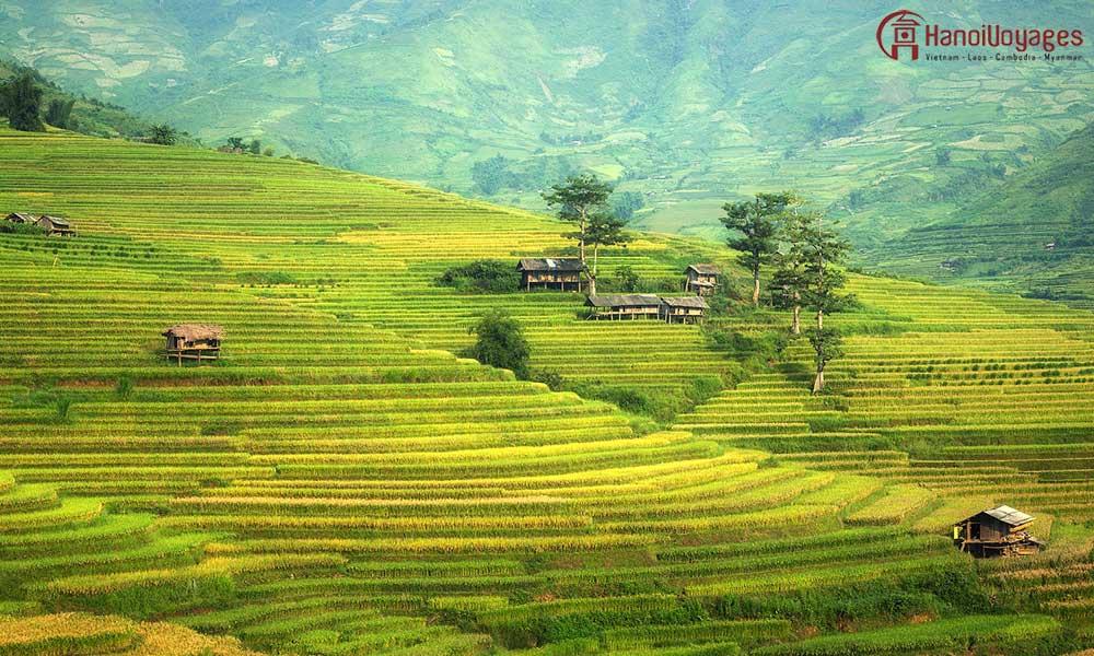 Rizières en terrasse - Vietnam en été - Âme du Vietnam