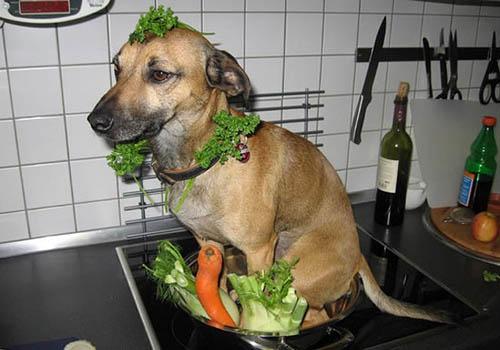 On mange du chien?