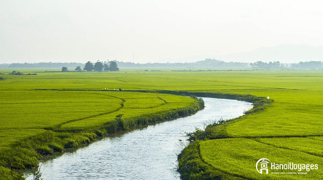 le champs en terreses Ninh Binh