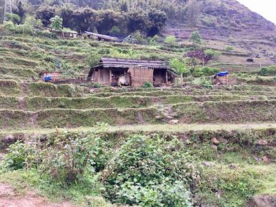 Cabane dans une pente d'un paysan, propriétaire des champs de riz, aux alentours de Sapa.