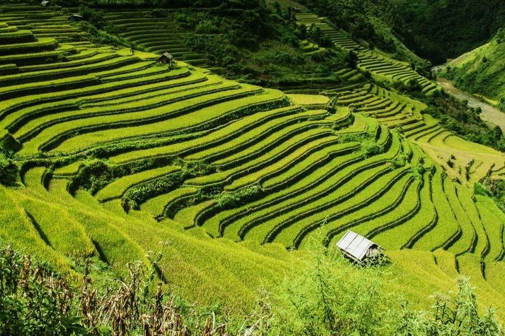 rizières de Mu Cang Chai