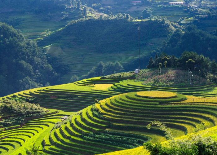 scenery-mu-cang-chai-vietnam-panorama