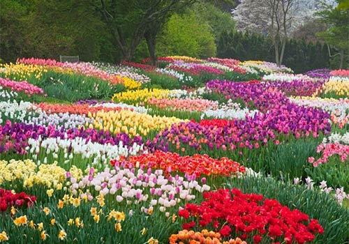 jardin des fleurs de da lat