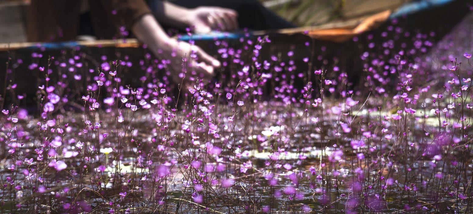 fleur voyage de noce au Vietnam